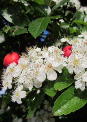 wachsen-blüte-früchte-300