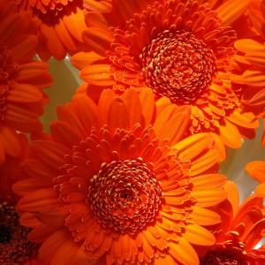 Sommerblumen-fb