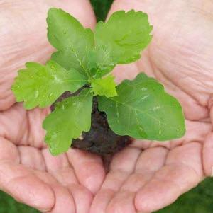 die Geschäftsidee hegen und pflegen wie eine jung Pflanze
